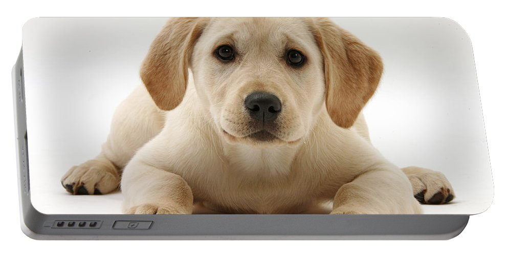 Nature Portable Battery Charger featuring the photograph Yellow Lab Puppy by Mark Taylor