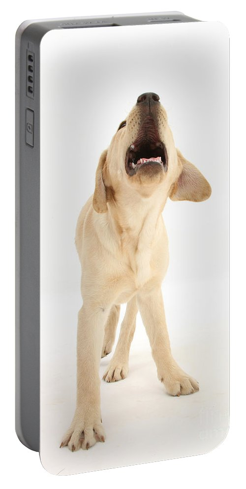 Nature Portable Battery Charger featuring the photograph Yellow Labrador Retriever Pup Barking by Mark Taylor