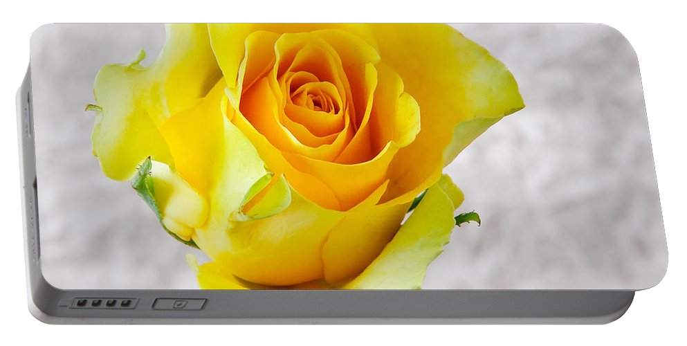 Aroma Portable Battery Charger featuring the photograph Yellow Rose by Tom Gowanlock
