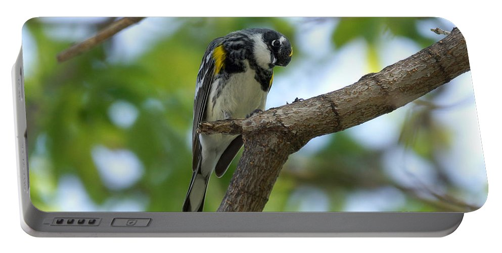 Warbler Portable Battery Charger featuring the photograph Yellow Rumped Warbler Looking Down by Lori Tordsen