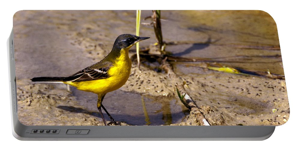 Bird Portable Battery Charger featuring the photograph Yellow Wagtail by Focus Fotos