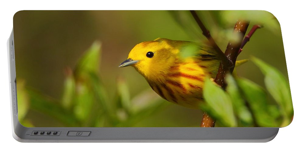 Warbler Portable Battery Charger featuring the photograph Yellow Warbler by Bruce J Robinson