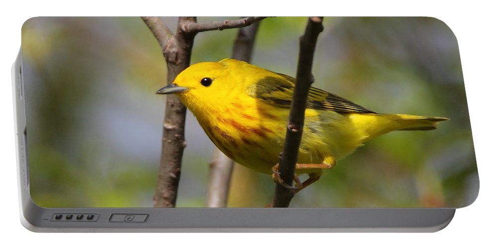 Warbler Portable Battery Charger featuring the photograph Yellow Warbler II by Bruce J Robinson