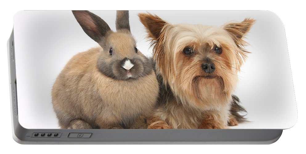 Nature Portable Battery Charger featuring the photograph Yorkshire Terrier And Young Rabbit by Mark Taylor
