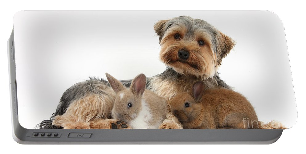 Nature Portable Battery Charger featuring the photograph Yorkshire Terrier Dog And Baby Rabbits by Mark Taylor