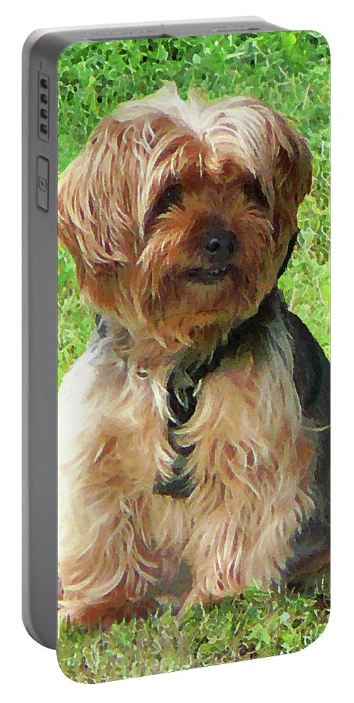 Dog Portable Battery Charger featuring the photograph Yorkshire Terrier In Park by Susan Savad