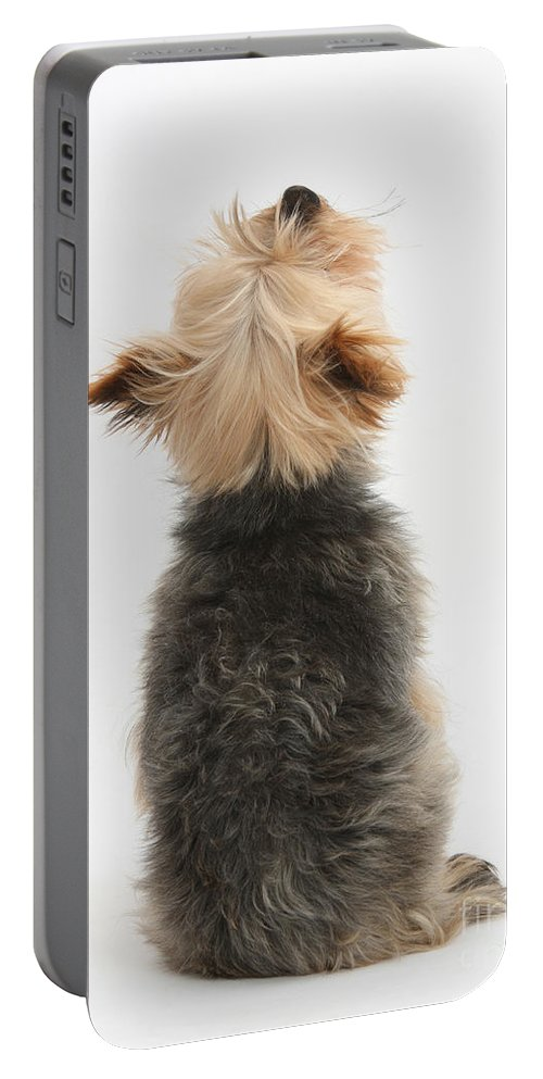 Dog Portable Battery Charger featuring the photograph Yorkshire Terrier by Mark Taylor