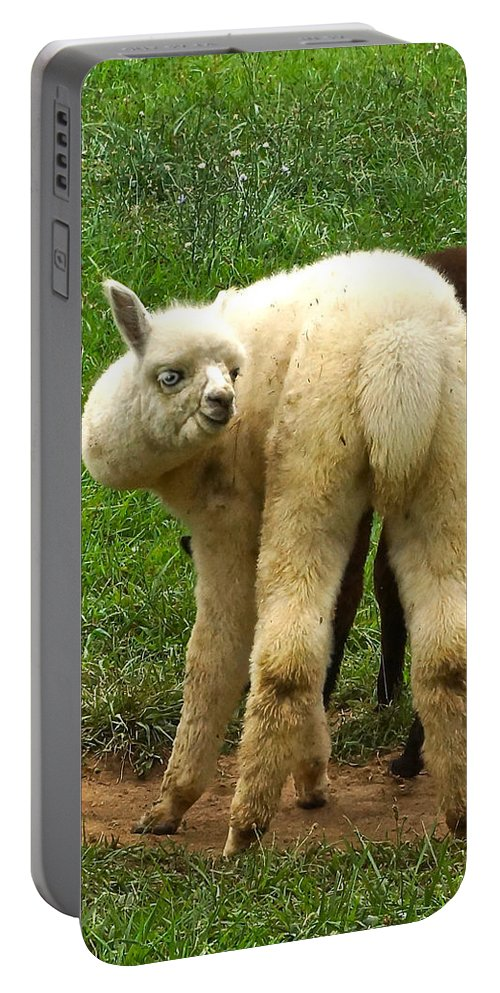 White Alpaca Staring Portable Battery Charger featuring the photograph You Can't Sneak Up On Alpacas by Byron Varvarigos