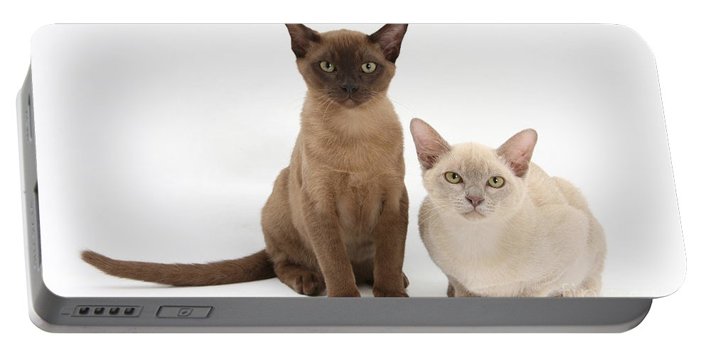 Animal Portable Battery Charger featuring the photograph Young Burmese Cats by Mark Taylor