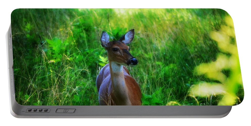 Landscape Portable Battery Charger featuring the photograph Young Deer by Peggy Franz