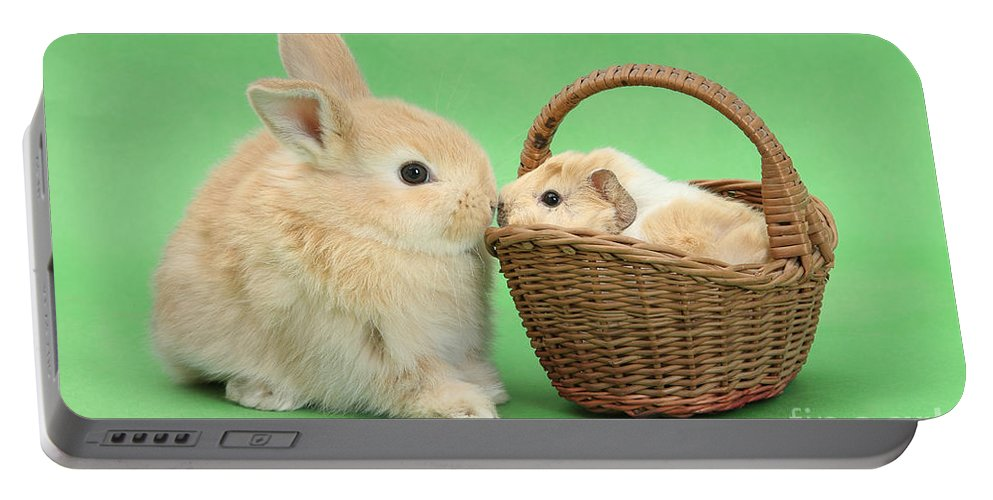 Nature Portable Battery Charger featuring the photograph Young Rabbit With Baby Guinea Pig by Mark Taylor