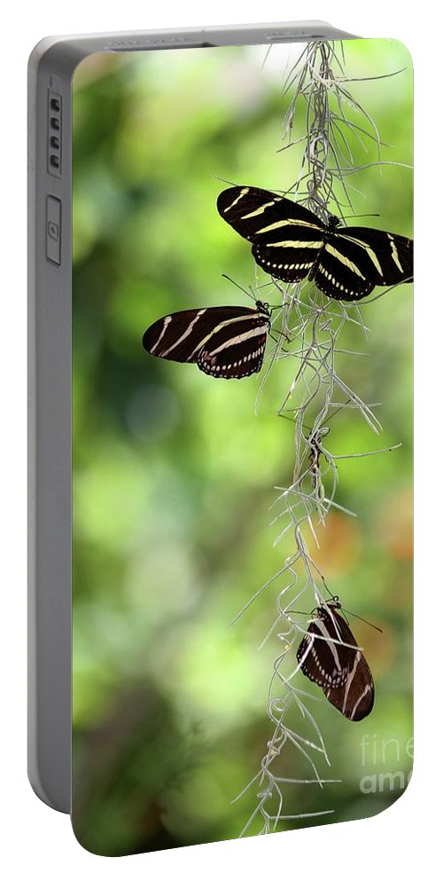 Zebra Portable Battery Charger featuring the photograph Zebra Butterflies Hanging Out by Sabrina L Ryan