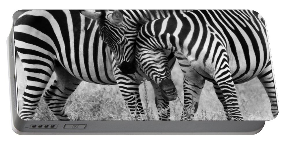 Africa Portable Battery Charger featuring the photograph Zebra Hug 2 by Jack Daulton