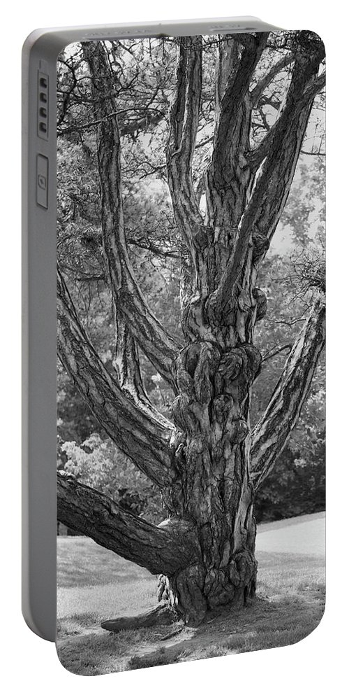 Black And White Portable Battery Charger featuring the photograph Zebra Tree Black And White by Thomas Woolworth