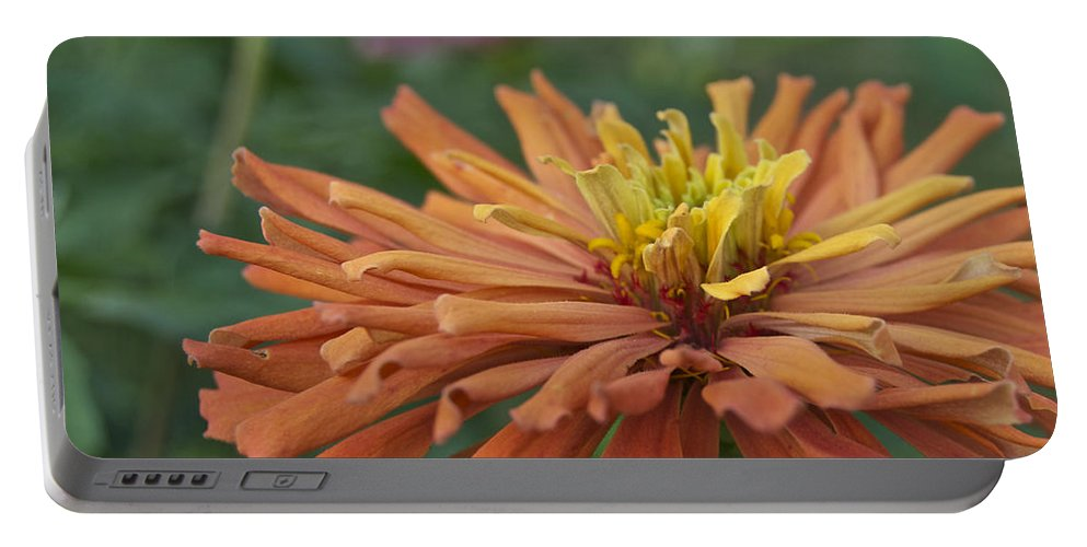Zinnia Portable Battery Charger featuring the photograph Zinnia Up Close 2823 by Michael Peychich