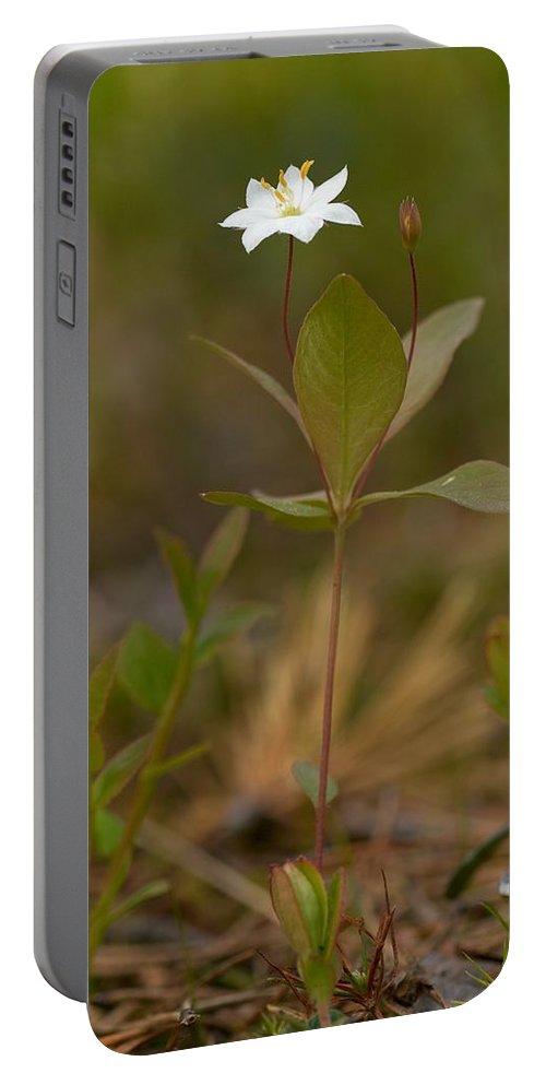 Lehtokukka Portable Battery Charger featuring the photograph Arctic Starflower by Jouko Lehto