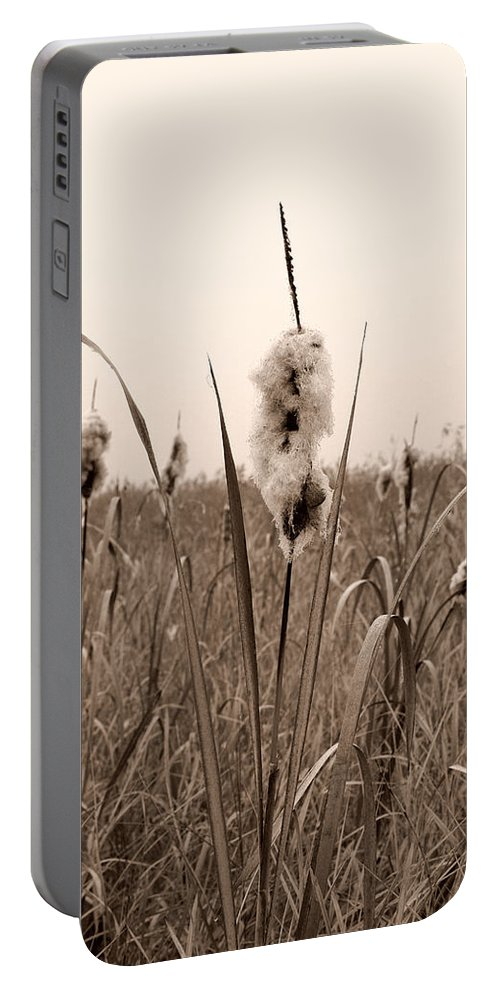 Lehtokukka Portable Battery Charger featuring the photograph Broadleaf Cattail 1 by Jouko Lehto