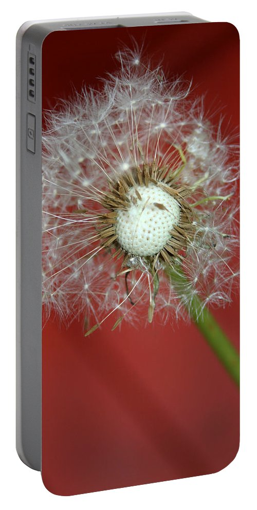 Nature Portable Battery Charger featuring the photograph Nature Red by Linda Sannuti