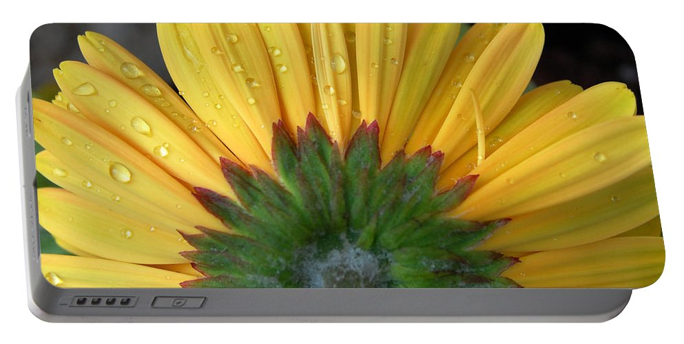 Flowers Portable Battery Charger featuring the photograph Water Drops On Gerbera Daisy by Amy Fose