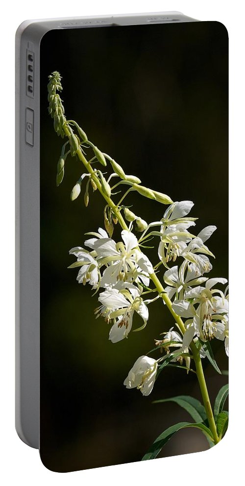 Lehtokukka Portable Battery Charger featuring the photograph White Fireweed by Jouko Lehto