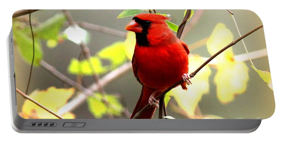 Cardinal Portable Battery Charger featuring the photograph 0138 - Cardinal by Travis Truelove