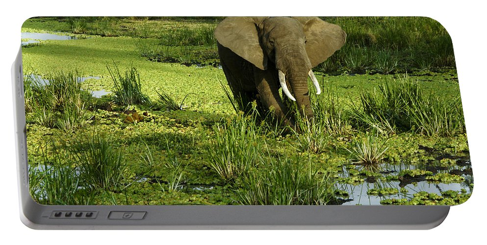 Africa Portable Battery Charger featuring the photograph African Elephant In Swamp by Michele Burgess