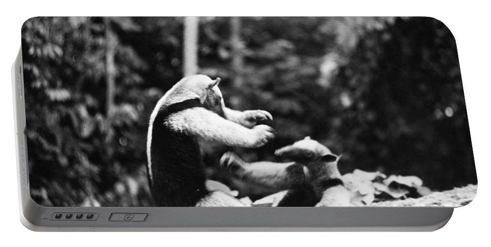 20th Century Portable Battery Charger featuring the photograph Amazon: Anteater by Granger