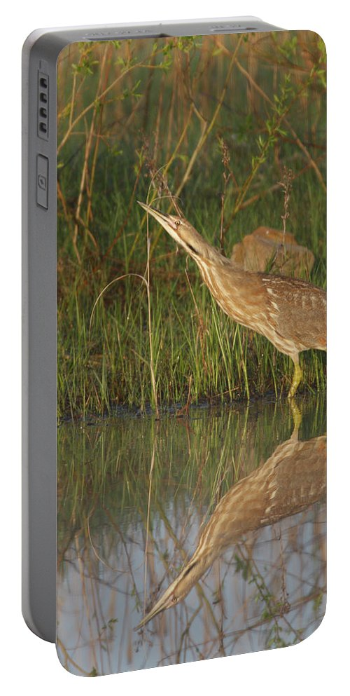 Native Portable Battery Charger featuring the photograph American Bittern Close To Shore by Mark Wallner