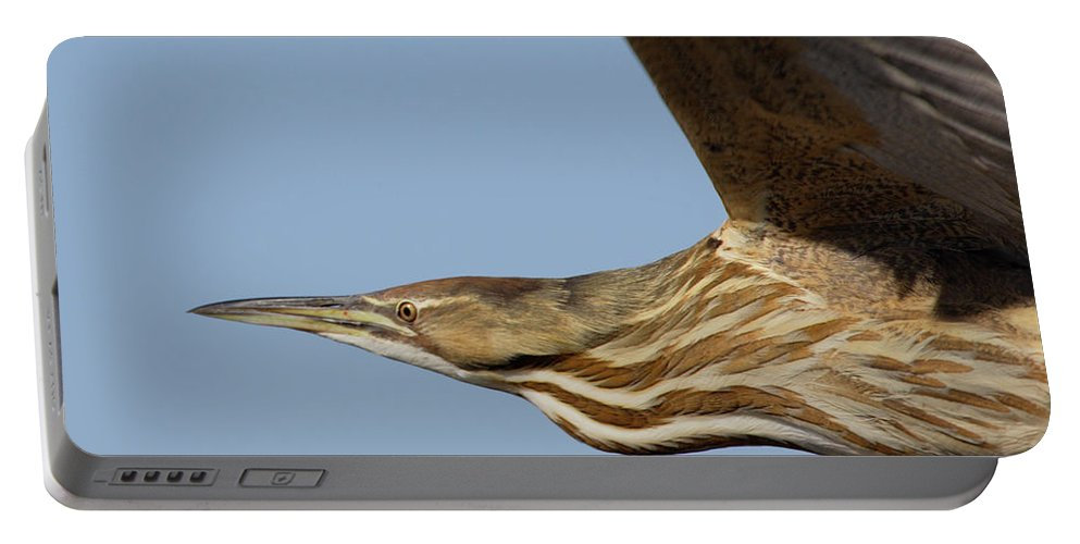 Fly Portable Battery Charger featuring the photograph American Bittern Flies By by Mark Wallner