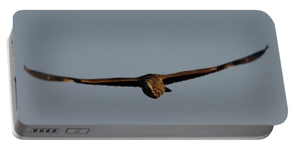 Flight Portable Battery Charger featuring the photograph An American Bittern Comes Flying In. by Mark Wallner