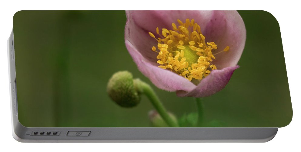 Flower Portable Battery Charger featuring the photograph Anemone Japonica by TouTouke A Y