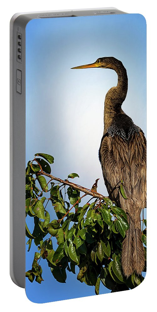 Florida Portable Battery Charger featuring the photograph Anhinga by Cyndy Doty