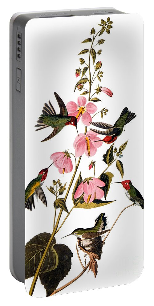 1838 Portable Battery Charger featuring the photograph Audubon: Hummingbird by Granger