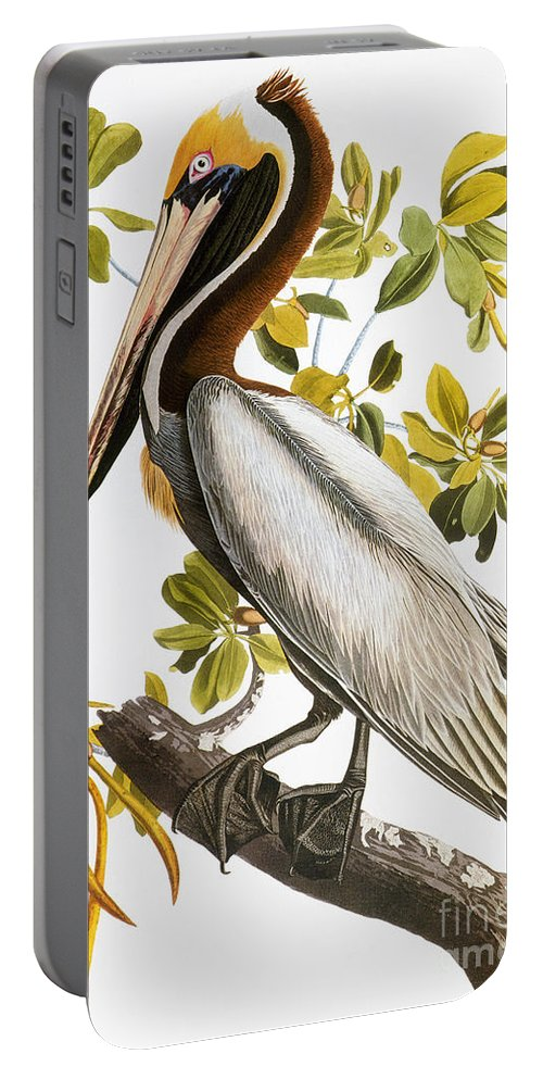 1838 Portable Battery Charger featuring the photograph Audubon: Pelican by Granger