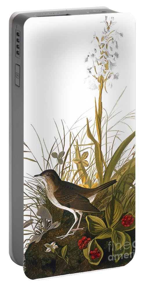 1838 Portable Battery Charger featuring the photograph Audubon: Thrush by Granger