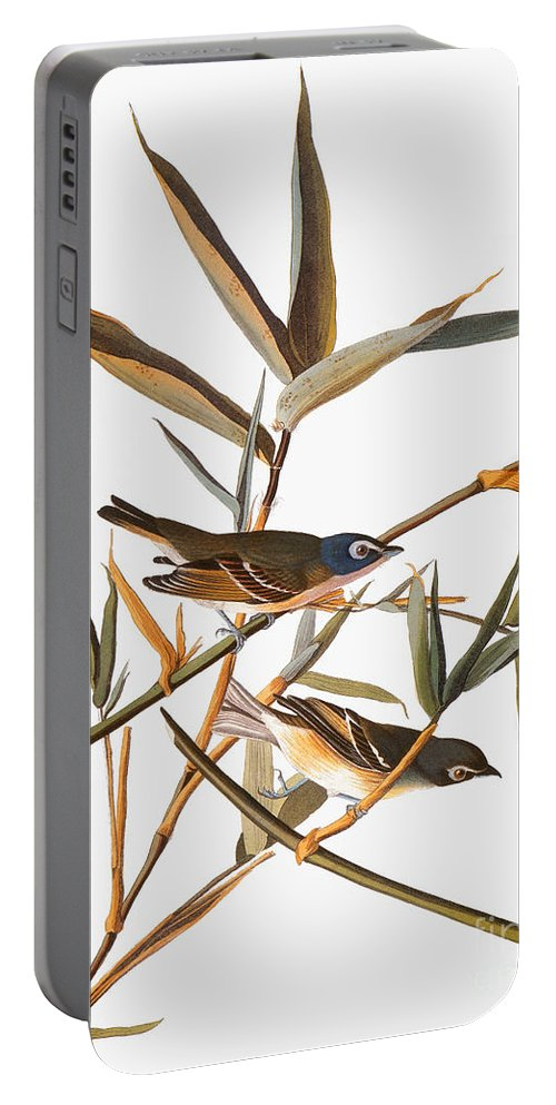 1838 Portable Battery Charger featuring the photograph Audubon: Vireo by Granger