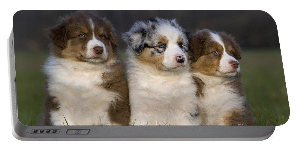Australian Shepherd Portable Battery Charger featuring the photograph Australian Shepherd Puppies by Jean-Louis Klein & Marie-Luce Hubert