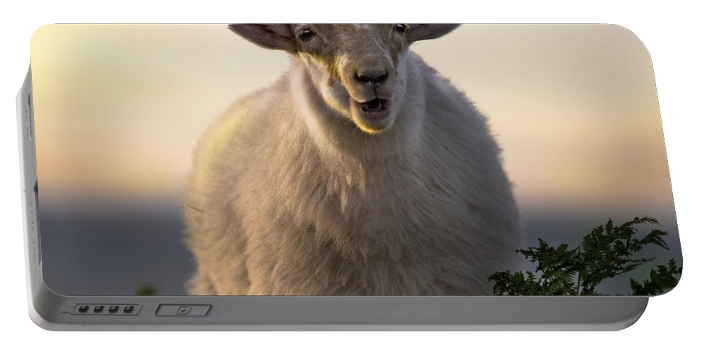 Long Mynd Hill Portable Battery Charger featuring the photograph Baa Baa by Angel Ciesniarska