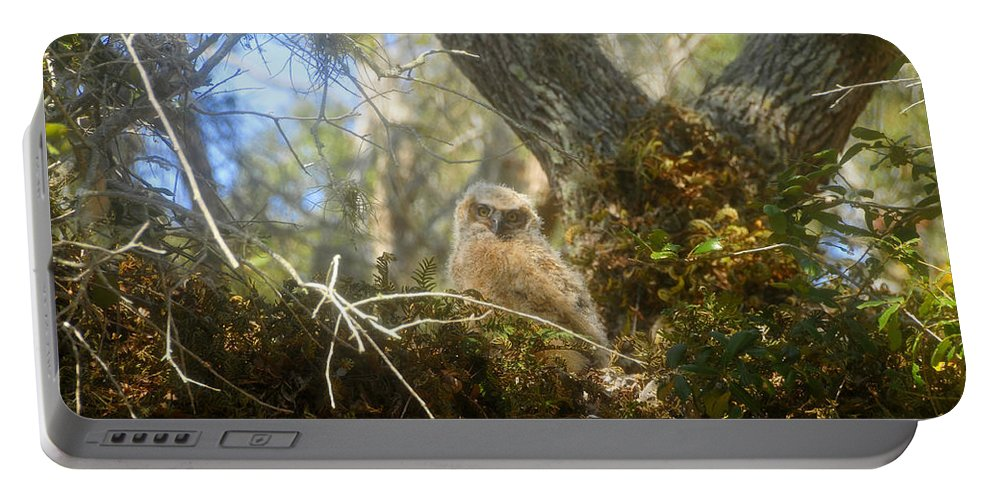 Great Horned Owl Portable Battery Charger featuring the photograph Babe In The Woods by David Lee Thompson