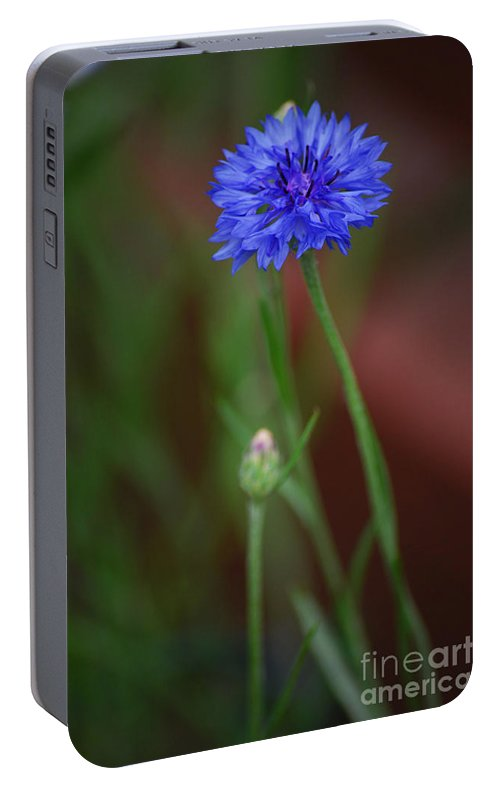 Bachelor Button Portable Battery Charger featuring the photograph Bachelor Button Blues Lll by Michelle Hastings