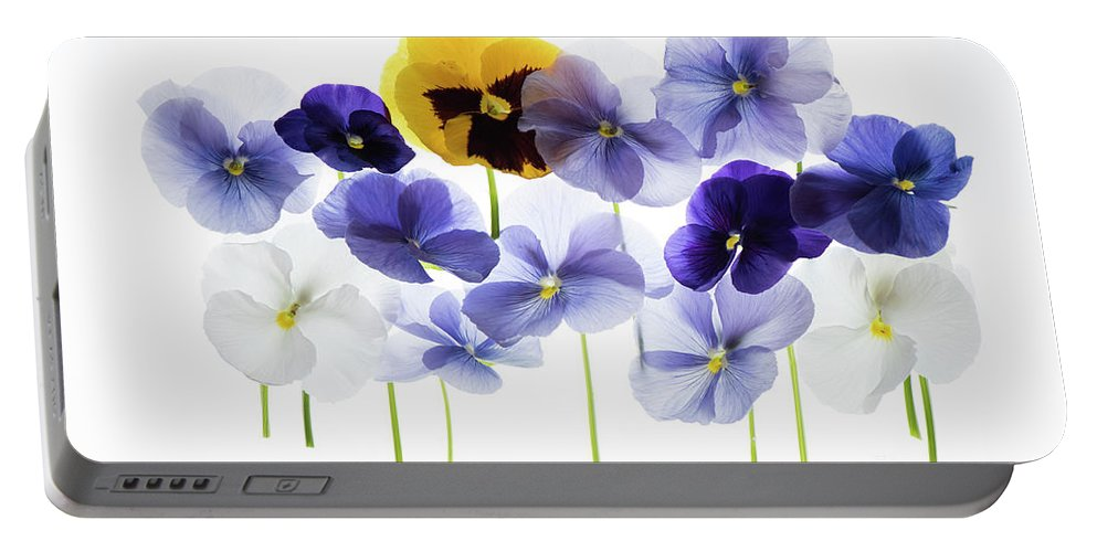 Backlit Portable Battery Charger featuring the photograph Backlit Pansies  by Dan Yeger