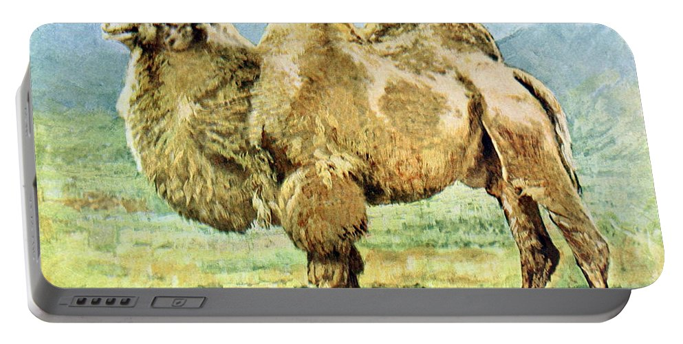 Bactrian Camel Portable Battery Charger featuring the photograph Bactrian Camel, Endangered Species by Biodiversity Heritage Library