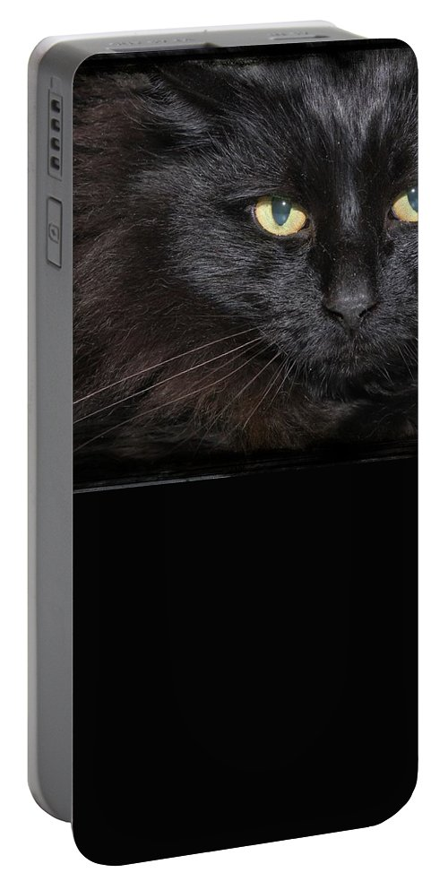 Black Cat Portable Battery Charger featuring the photograph Black Cat by Joyce Baldassarre