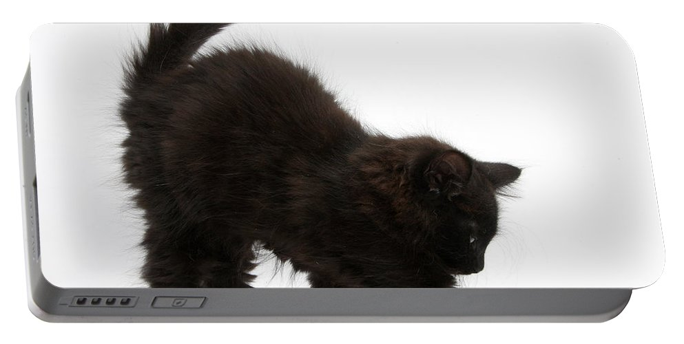 Nature Portable Battery Charger featuring the photograph Black Kitten Stretching by Mark Taylor
