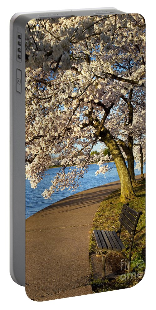 Cherry Blossom Portable Battery Charger featuring the photograph Blossoming Cherry Trees by Brian Jannsen