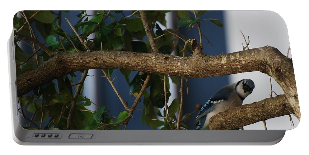 Birds Portable Battery Charger featuring the photograph Blue Bird by Rob Hans