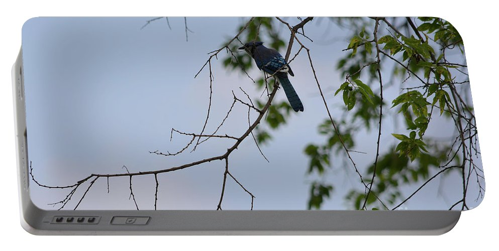 Blue Jay In Tree Prints Portable Battery Charger featuring the photograph Blue Jay In Tree by Ruth Housley