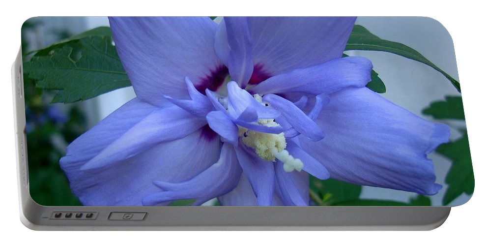 Rose Of Sharon Portable Battery Charger featuring the photograph Blue Rose Of Sharon by Michiale Schneider