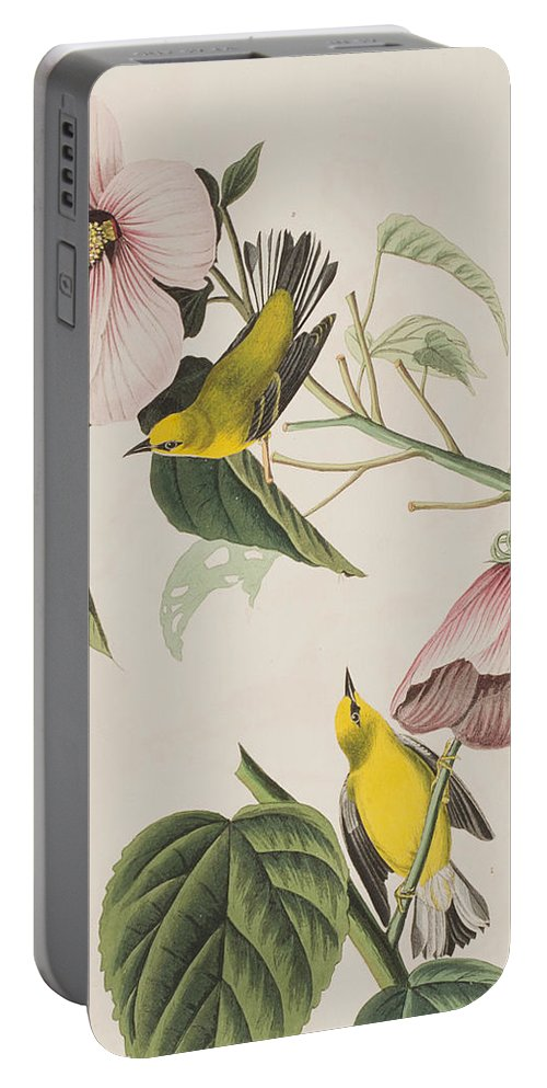 Blue-winged Yellow Warbler Portable Battery Charger featuring the painting Blue-winged Yellow Warbler by John James Audubon