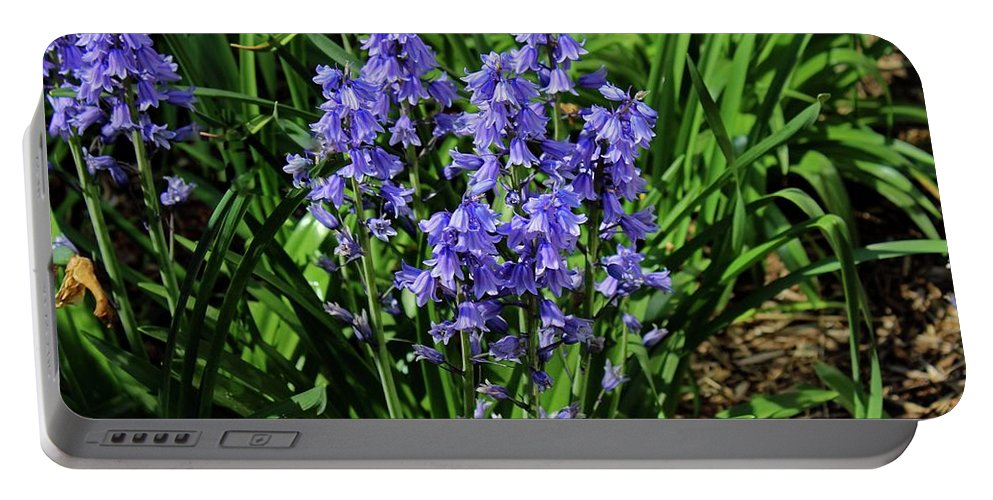 Bluebells Portable Battery Charger featuring the photograph Bluebells by Michiale Schneider